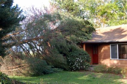 tree service in queen creek az-min