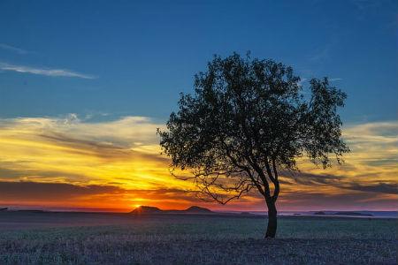 Removing Trees Safely in Gilbert AZ